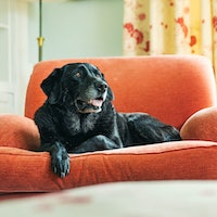 Will my dog get separation anxiety when I go back to work? 7 things to know