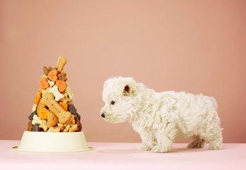 Dog staring at bowl of treats