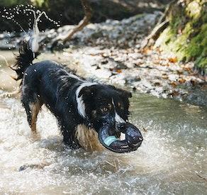 ZippyPaws Floating Squeaker Dog Toy