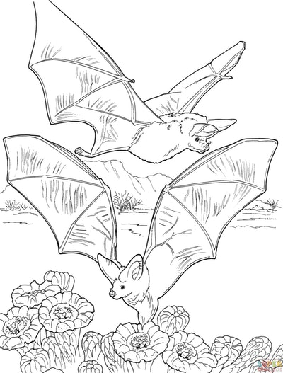 Bat coloring page; two bats flying over flowers