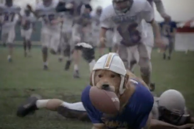 'AirBud' is about a golden retriever.