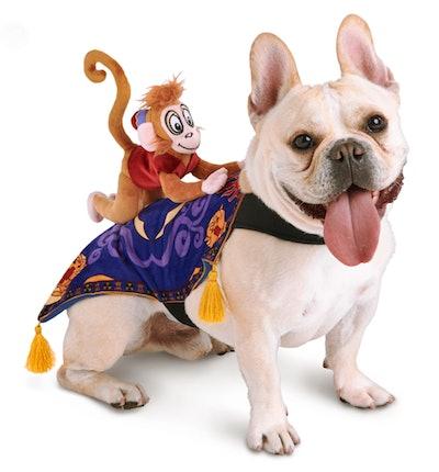 Abut pet costume