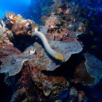 Horny sea snakes are attacking divers because of this one trait