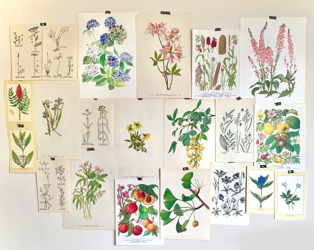 Cottage Core Botanical Wall Art