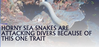 All of these attacks took place between May and August, during the mating season.  Most of the snakes that ...