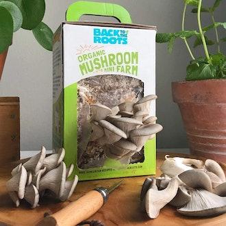 Back to the Roots Organic Mini Mushroom Grow Kit