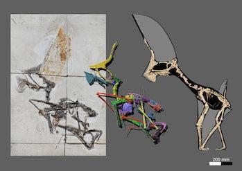 Tupandactylus navigans GP/2E 9266 fossil