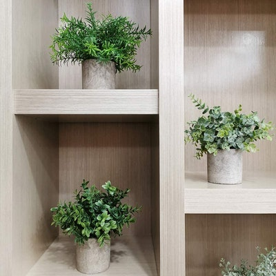 Winlyn Mini Potted Plants (Set of 3)