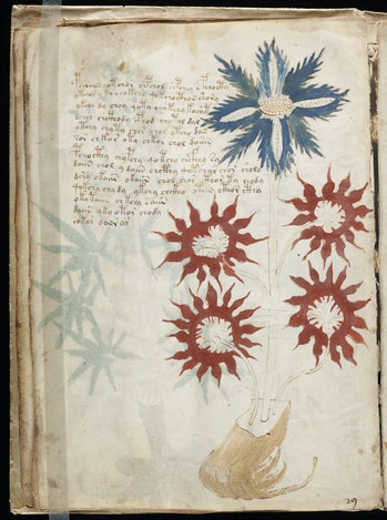 A drawing of a flower from the strange manuscript.
