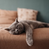 Is it OK to let your cat sleep in your bed? Why the science is complicated