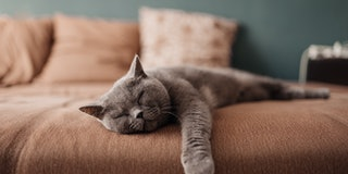 Lazy cat sleeping on bed
