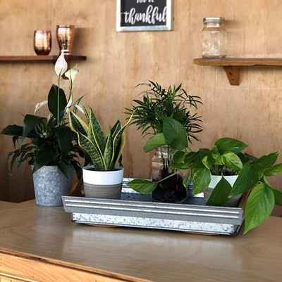 Costa Farms Clean Air Plant Collection (4 Pack)