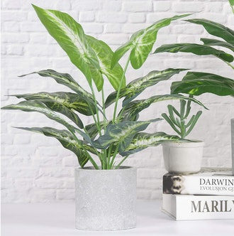 JC nateva Small Fake Plant