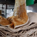 Ananas Anam's leather alternative Piñatex in production