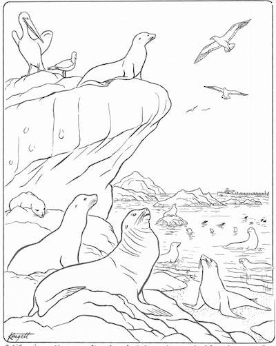 Illustration of Catalina Island seals