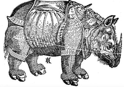 Vintage illustration of a rhinoceros