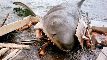 jaws movie big shark