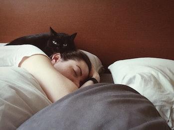 cat, bed