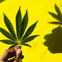 """Cannabis hyperemesis syndrome: 5 scientific answers to """"scromiting"""" questions"""