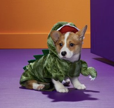 Dog dressed in a dinosaur costume