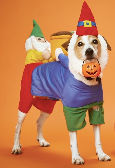 Dog dressed as a gnome