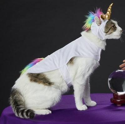 Cat dressed as a unicorn