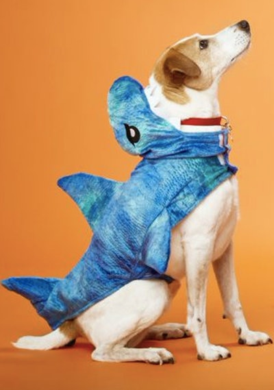 Dog dressed in a shark costume