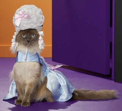 Cat in a Marie Antoinette costume