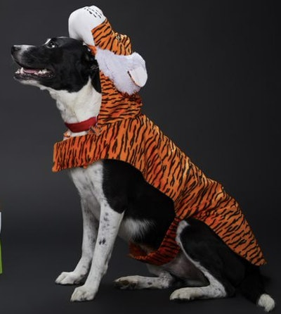 Dog wearing a tiger costume