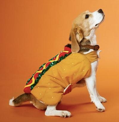 Dog wearing a hot dog costume