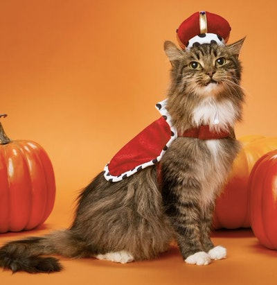 Cat dressed as a king
