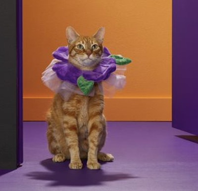 Flower Cat Costume