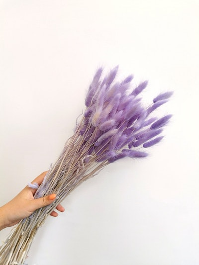 Dried Lilac Bunny Tails