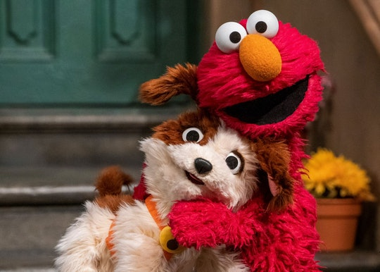 Tango will join the cast of 'Sesame Street' as Elmo's adopted puppy in an upcoming special.