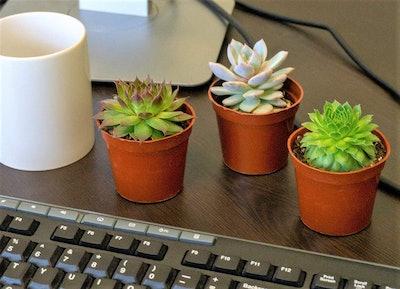 Seville Farms Mini Succulent Trio