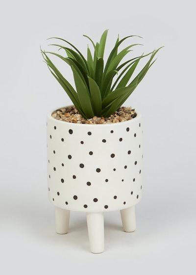 Succulent in Polka Dot Ceramic Planter