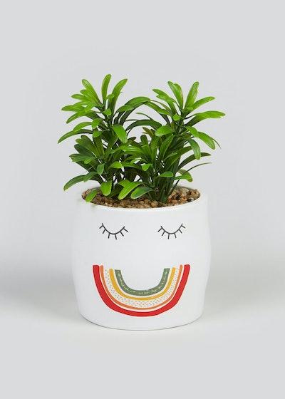 Succulent in Rainbow Pot