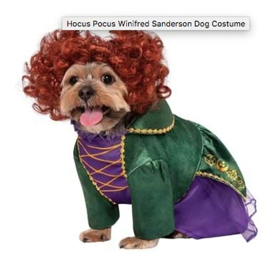 Dog dressed as Winifred from Hocus Pocus