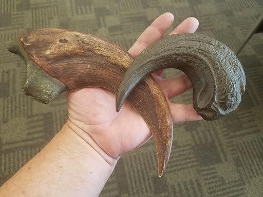 Kirkland's Utahraptor claw