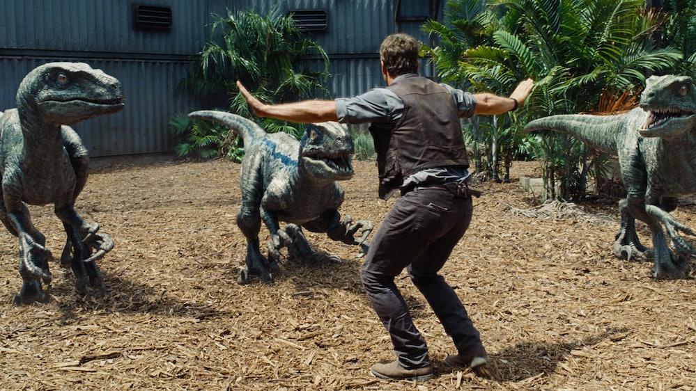 Chris Pratt training raptors in Jurassic World.