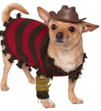 Chihuahua in a Freddy Krueger costume