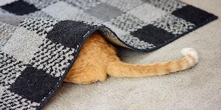 Cat hiding under a rug