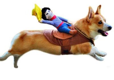 cowboy Halloween costume for corgi dog