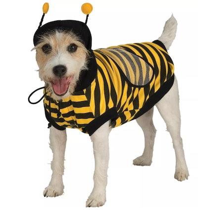 dog in a bee Halloween costume