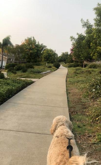 Walking my dog outside along a pathway