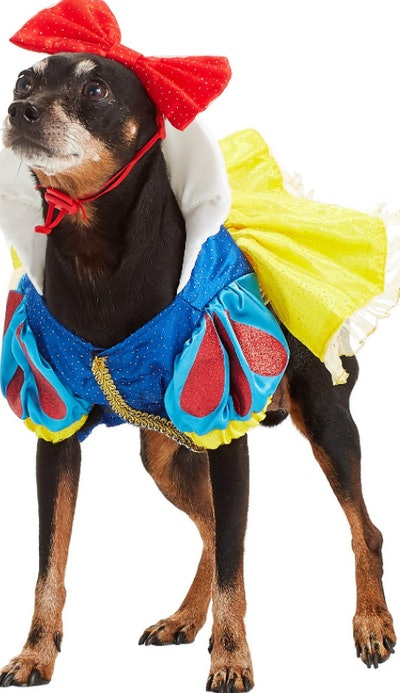 dog wearing a Snow White costume
