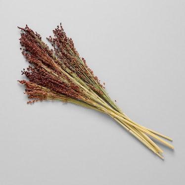 Dried Red Broom Corn