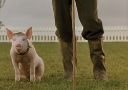 Babe the pig sits beside his farmer, who is only visible from the knees down.