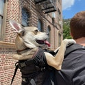 K9 Sport Sack review dog backpack that's actually worth the price