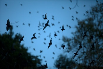 Group of flying bats